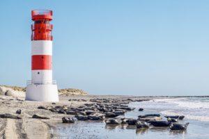 beach, lighthouse, crawl